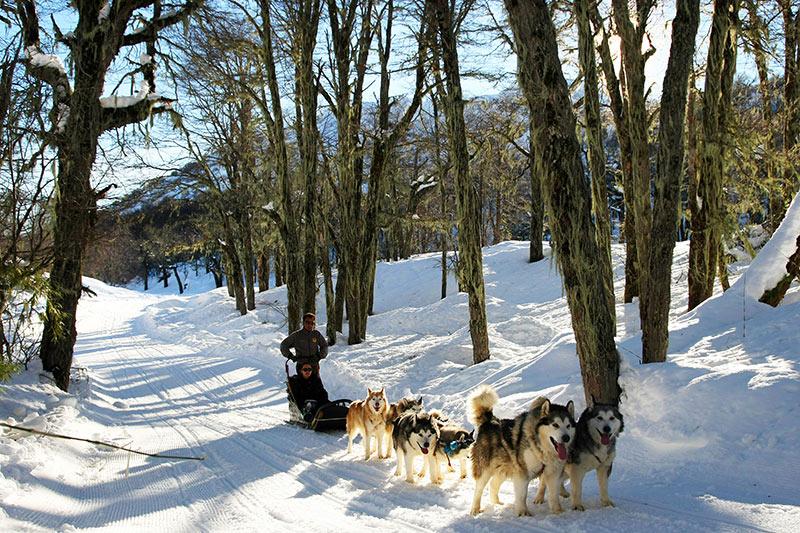 Trenó de cães em Chillán