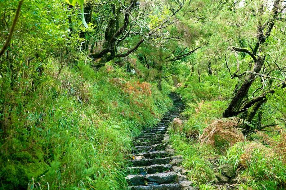 <strong>Floresta Laurissilva da Madeira </strong>                                    A Ilha da Madeira é dona da maior floresta Laurissilva viva no mundo. Esse tipo de floresta é especial pois parte de sua vegetação remonta ao período Terciário na escala de tempo geológico. Ou seja, há 20 milhões de anos, quando a floresta ocupava toda a área da bacia do Mediterrâneo, Sul da Europa e Norte de África