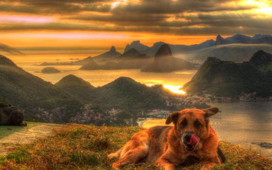 Cachorro descansa no parque da cidade de Niterói, Rio de Janeiro