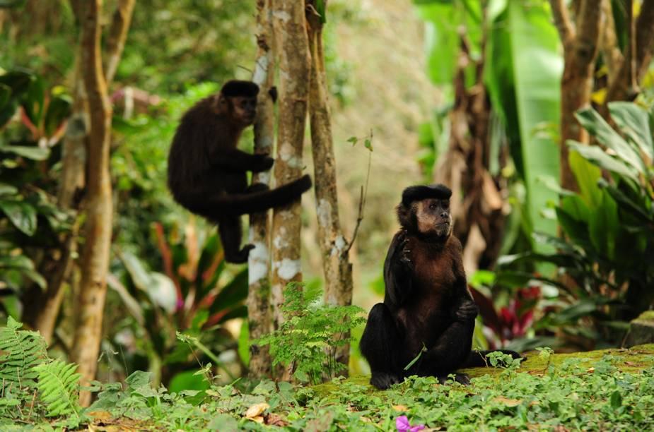 Não é difícil encontrar macaquinhos nas trilhas do Parque do Itatiaia