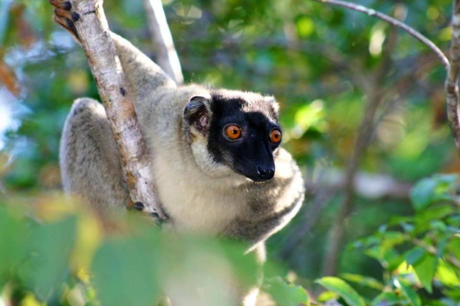 """<strong>Madagascar</strong>Madagascar era um ótimo território para defender a <a href=""""http://viajeaqui.abril.com.br/continentes/africa"""" rel=""""África"""" target=""""_blank"""">África</a>. Hoje mais conhecida como o título da celebrada animação, é um país de ricas (e muito ameaçadas) fauna e flora. Lêmures, tartarugas e camaleões estão entre as espécies endêmicas mais conhecidas"""