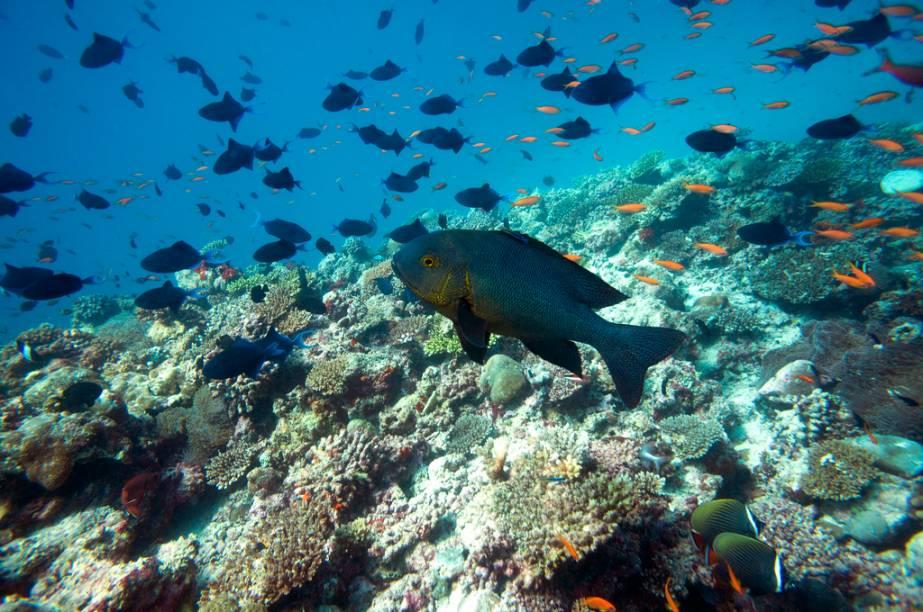 Uma das atividades imperdíveis nas Ilhas Maldivas é o mergulho