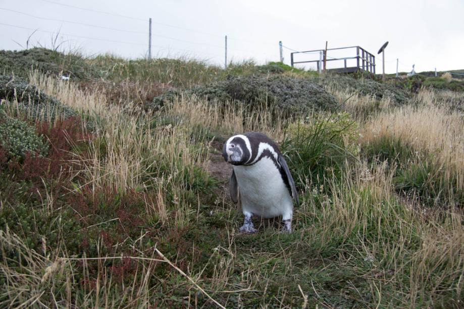Também conhecidas como Falklands e eterno alvo de disputas territoriais entre britânicos e argentinos, estas ilhas também fazem parte de cruzeiros que visitam o Cabo Horn e a Península Antártica. E, sim, não faltarão pinguins para recebê-lo