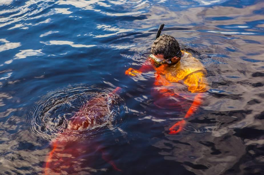 O boto habita o Rio Amazonas e faz parte do nosso folclore