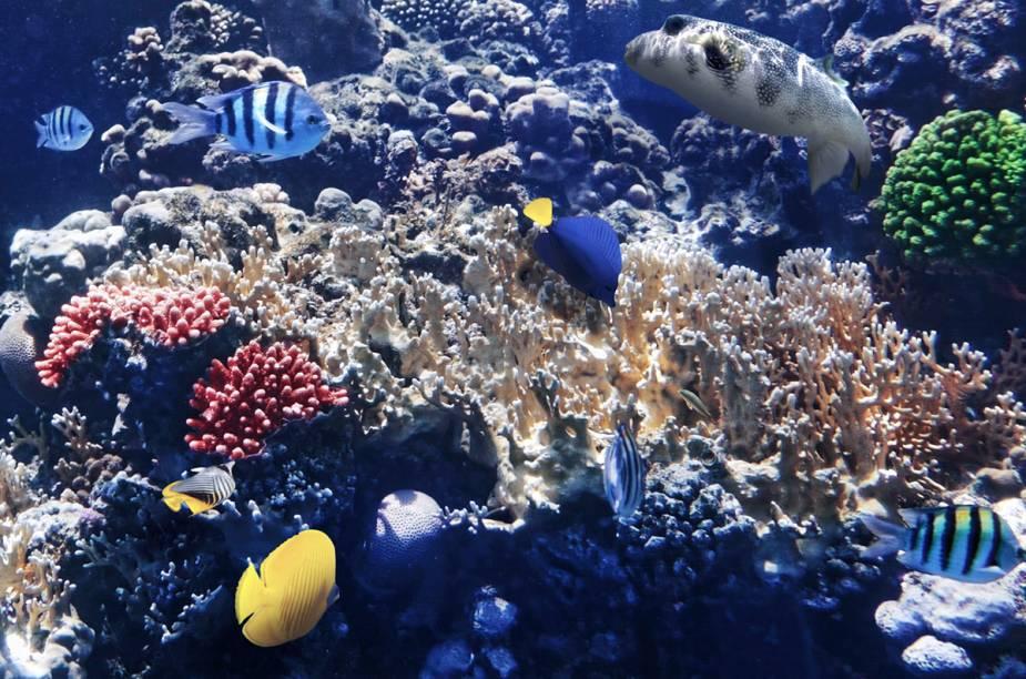 """Os corais do Mar Vermelho são um prato cheio para quem curte mergulhar. <a href=""""http://viajeaqui.abril.com.br/materias/conheca-dez-lugares-incriveis-para-mergulhar-pelo-planeta"""" rel=""""Conheça outros lugares para praticar mergulho pelo mundo"""" target=""""_blank"""">Conheça outros lugares para praticar mergulho pelo mundo</a>."""