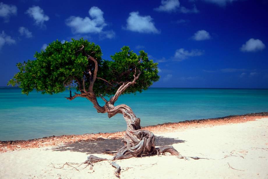 As árvores retorcidas, chamadas de divi divi, viraram o símbolo natural de Aruba
