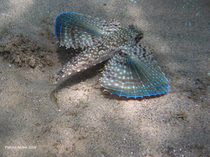"""<strong>1. Mergulho em Búzios</strong>Com rica vida marinha e águas de ótima visibilidade (média de 10 metros), Búzios é um bom destino para mergulho. Corais, tartarugas e diversos cardumes de peixes podem ser vistos o ano todo. O principal ponto fica entre as praias de José Fernandes e José Fernandinho – com recife de corais no canto direito. <a href=""""http://tourshop.com.br"""" rel=""""Agência Tour Shop"""" target=""""_blank"""">Agência Tour Shop</a>, 22/2623-4733."""