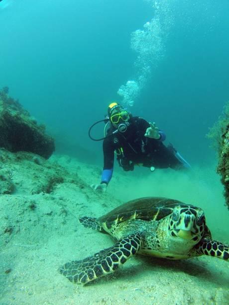 """<strong>11. Mergulho em Ilha Grande</strong>Um dos melhores destinos para mergulho do país, a Baía de Ilha Grande tem mais de 900 espécies marinhas e muitos focos de naufrágios. Um dos pontos ideais para conferir a variedade de peixes é a Ilha de Jorge Grego. Na Enseada do Bananal, é possível ver o que resta de um navio e um helicóptero naufragados. <a href=""""http://elitedivecenter.com.br"""" rel=""""Elite Dive Center"""" target=""""_blank"""">Elite Dive Center</a>, 24/99936-4181."""