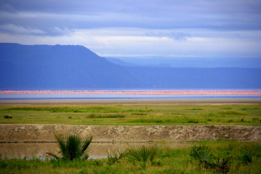 "<strong><a href=""https://www.lakemanyara.net/"" target=""_blank"" rel=""noopener"">Parque Nacional do Lago Manyara</a>, Karatu,Tanzânia</strong> O parque ocupa uma área de aproximadamente 32 mil hectares, cobrindo terras áridas, florestas e lagos. Por aqui, é possível encontrar animais como leopardos e girafas, além de mais de 400 espécies de aves <em><a href=""https://www.booking.com/searchresults.pt-br.html?aid=332455&sid=b6bf542626b1a2c7a9951e44506f270a&sb=1&src=searchresults&src_elem=sb&error_url=https%3A%2F%2Fwww.booking.com%2Fsearchresults.pt-br.html%3Faid%3D332455%3Bsid%3Db6bf542626b1a2c7a9951e44506f270a%3Btmpl%3Dsearchresults%3Bac_click_type%3Db%3Bac_position%3D0%3Bclass_interval%3D1%3Bdest_id%3D14665%3Bdest_type%3Dregion%3Bdtdisc%3D0%3Bfrom_sf%3D1%3Bgroup_adults%3D2%3Bgroup_children%3D0%3Binac%3D0%3Bindex_postcard%3D0%3Blabel_click%3Dundef%3Bno_rooms%3D1%3Boffset%3D0%3Bpostcard%3D0%3Braw_dest_type%3Dregion%3Broom1%3DA%252CA%3Bsb_price_type%3Dtotal%3Bsearch_selected%3D1%3Bshw_aparth%3D1%3Bslp_r_match%3D0%3Bsrc%3Dsearchresults%3Bsrc_elem%3Dsb%3Bsrpvid%3D09ac81fe9dd70131%3Bss%3DEtosha%2520National%2520Park%252C%2520Nam%25C3%25ADbia%3Bss_all%3D0%3Bss_raw%3DEtosha%2520national%2520park%3Bssb%3Dempty%3Bsshis%3D0%3Bssne%3DRepovesi%2520National%2520Park%252C%2520Kouvola%252C%2520Finland%3Bssne_untouched%3DRepovesi%2520National%2520Park%252C%2520Kouvola%252C%2520Finland%3Btop_ufis%3D1%26%3B&ss=Lago+Manyara%2C+Lake+Manyara+National+Park%2C+Tanzania&is_ski_area=&ssne=Etosha+National+Park&ssne_untouched=Etosha+National+Park&checkin_monthday=&checkin_month=&checkin_year=&checkout_monthday=&checkout_month=&checkout_year=&group_adults=2&group_children=0&no_rooms=1&from_sf=1&ss_raw=Lago+Manyara+national+park&ac_position=1&ac_click_type=g&dest_id=ChIJ63IcVZ3TNRgR82FUItOxioY&dest_type=landmark&place_id=ChIJ63IcVZ3TNRgR82FUItOxioY&place_id_lat=-3.6190593&place_id_lon=35.8061779&place_types=natural_feature%2Cestablishment&search_pageview_id=09ac81fe9dd70131&search_selected=true"" tar"