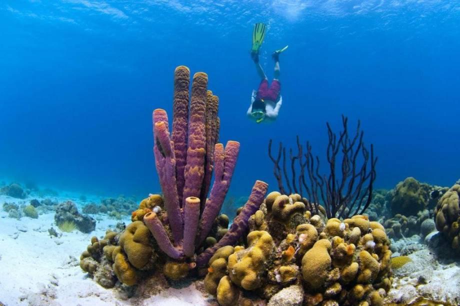 Mergulhador em Curaçao, ilha caribenha junto à costa sulamericana