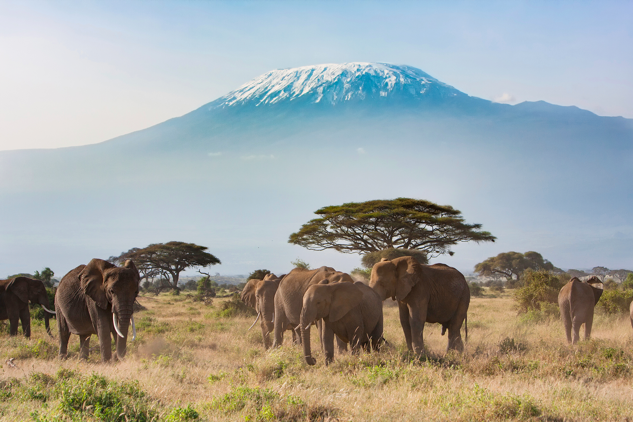 Monte Kilimanjaro, no Amboseli National Park, Quênia, África