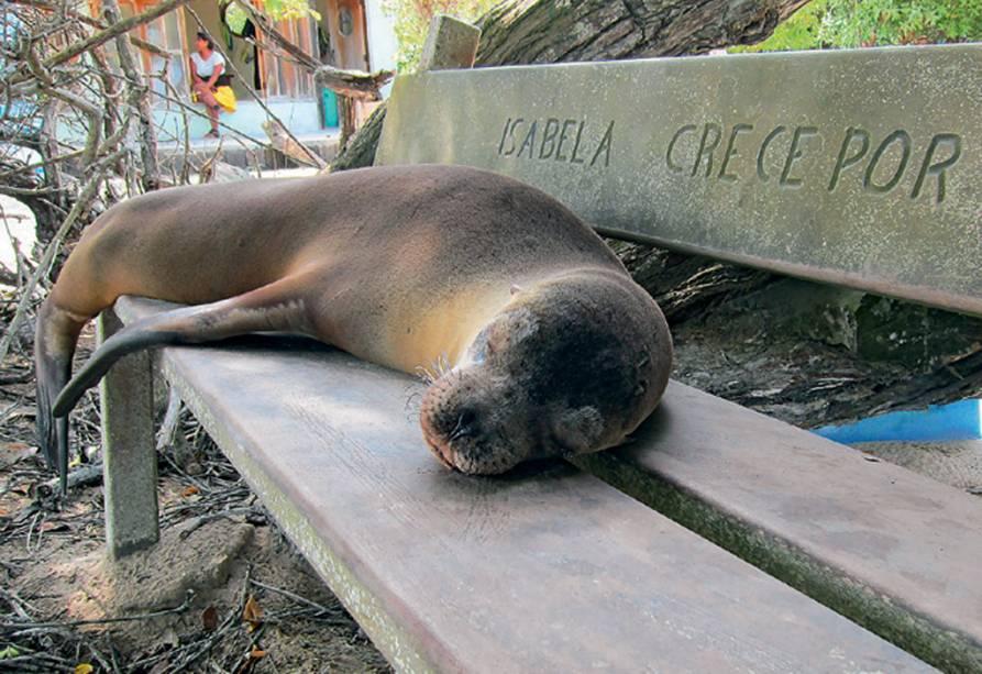 Leões-marinhos invadem ruas e bancos das praças das Ilhas de Galápagos