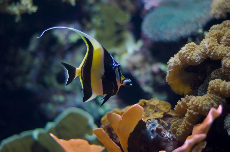 O Oceanário de Lisboa dispõe de centenas de espécies marinhas em diferente ambientes
