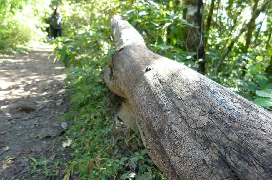 A trilha da Serra da Mantiqueira, na divisa entre Minas e São Paulo, é marcada por árvores da Mata Atlântica