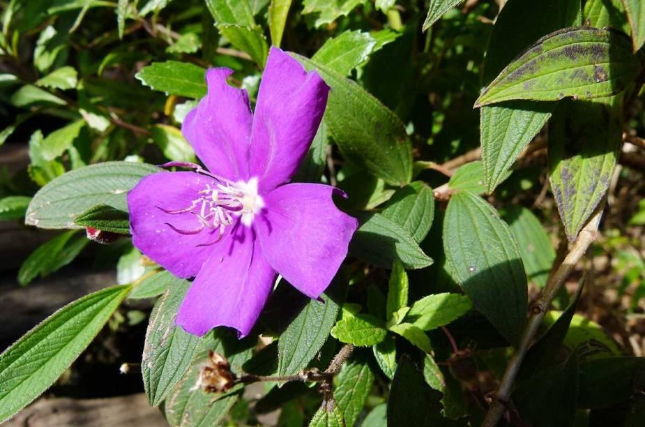 Singela flor na beira do caminho