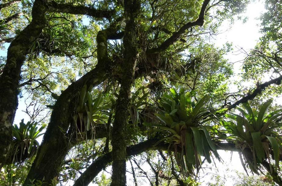 A exuberância da Mata Atlântica pode ser aprecidada na subida da trilha até a Pedra Redonda, em Monte Verde (MG)