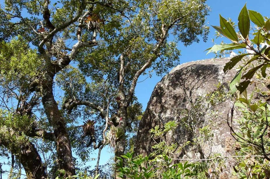 A trilha promove uma imersão de pelo menos uma hora (30 minutos para subir e outros 30 para descer) pela abundante Mata Altântica