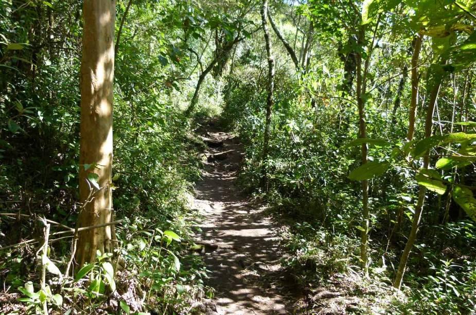 Coníferas e espécies de plantas nativas da Mata Atlântica misturam-se à paisagem das trilhas de Monte Verde (MG)