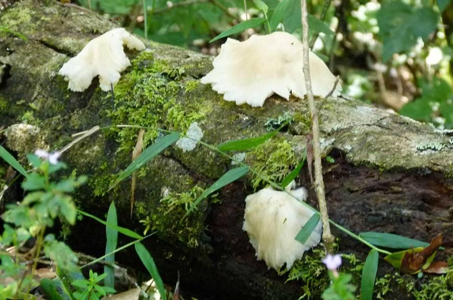 Fungos cobrem o tronco morto de uma árvore da trilha para a Pedra Redonda