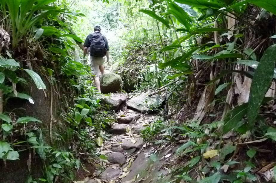 Trilha para a Cachoeira do Gato tem subidas e descidas; vá preparado com tênis, roupa adequada e muito repelente para evitar os borrachudos que se proliferam na mata