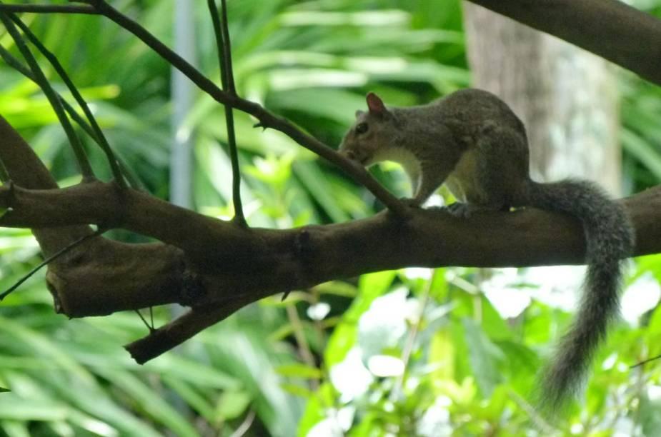 <strong>Bok Tower Gardens</strong>O jardim é refúgio para centenas de espécies de pássaros (inclusive aves migratórias) e esquilos. A reportagem também encontrou cobras e aranhas durante o passeio