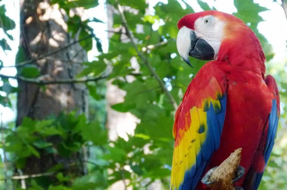 <strong>Brevard Zoo</strong>    Arara vermelha exibe suas cores na ala das aves da América do Sul, no zoo de Melbourne, na Flórida