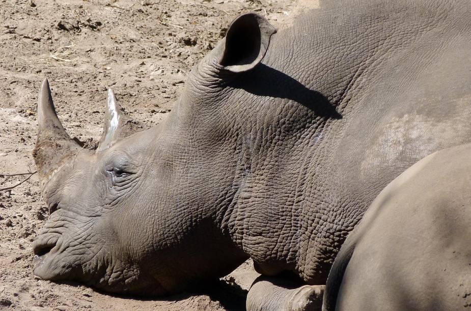 <strong>Brevard Zoo</strong>                    Rinoceronte descansa na ala africana do zoológico. O Brevard abre todos os dias, de 9h30 às 17h, com último horário de admissão às 16h15. O zoo fecha no Dia de Ação de Graças e no Natal