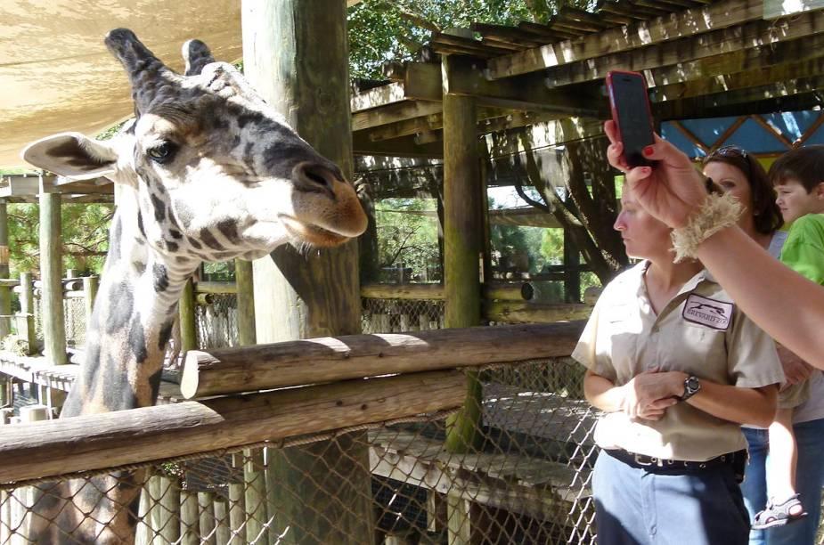 <strong>Brevard Zoo</strong>                    Localizado na cidade de Melbourne, na costa leste da Flórida, ao sul de Orlando, o zoológico expõe mais de 650 animais de vários ecossistemas diferentes. Na foto, um dos pontos altos da visita: o momento de alimentar as girafas. Uma plataforma deixa os visitantes na altura dos mamíferos. Em troca de comida, as simpáticas girafas tiram selfies com os turistas