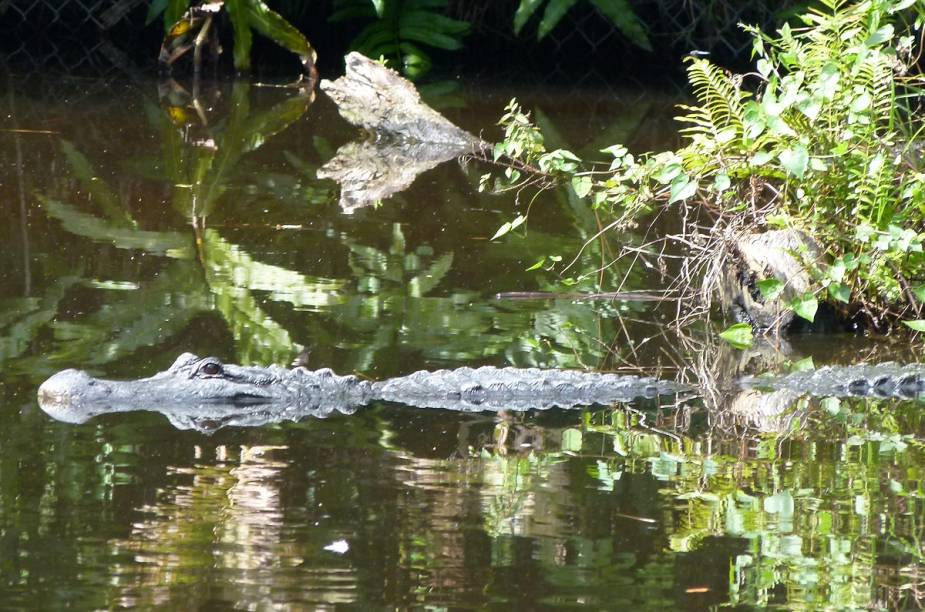 <strong>Brevard Zoo</strong>        Quem não conseguiu ter a sorte de ver alligators no habitat natural no passeio de airboat, é possível observá-los no zoológico - onde eles têm uma ala especial
