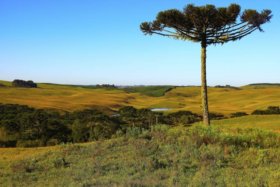 """Viajar pelas estradas do <a href=""""http://viajeaqui.abril.com.br/estados/br-rio-grande-do-sul"""" rel=""""Rio Grande do Sul"""" target=""""_self"""">Rio Grande do Sul</a> e se deparar com a beleza dos <strong>pampas gaúchos</strong> é a certeza de só enriquecer a viagem! A região é demarcada por paisagens pastoris, campos, matas e formações diversas, que ocupam mais de 60% do Estado"""