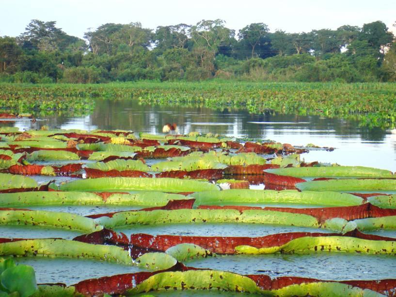 """<strong>4. <a href=""""http://portal.iphan.gov.br/pagina/detalhes/40"""" target=""""_blank"""" rel=""""noopener"""">Complexo de áreas protegidas doPantanal</a>,Mato GrossoeMato Grosso do Sul </strong>O ano de tombamento da região também é de 2000. No entanto, faz muito mais tempo que a área de mais de 187 mil hectares tem um aspecto valioso e que demanda a atenção. O ecossistema de água doce é um dos maiores do mundo. Sua área é ocupada por uma variedade de animais, como o jaburu, macaco-prego e cachorro do mato. Outro atrativo da região, que faz fronteira com aBolíviae o<a href=""""http://viajeaqui.abril.com.br/paises/paraguai"""" target=""""_blank"""" rel=""""noopener"""">Paraguai</a>,são os ipês roxos que a caracterizam e enriquecem sua flora"""