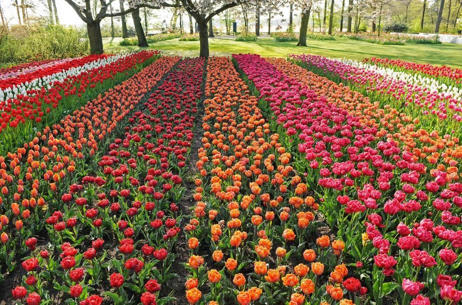O parque Keukenhof abre apenas durante a primavera europeia - que começa em março, e as tulipas florescem por poucas semanas