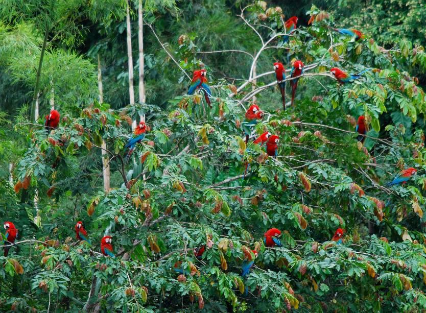 Com mais de 1,7 milhão de hectares, o parque abriga mais de trinta comunidades rurais e três grupos de tribos indígenas. Cercado por montanhas, ele possui uma das maiores biodiversidades do planeta e foi tombado como Patrimônio Mundial da Unesco em 1987. Aqui, ficam abrigadas mais de 800 espécies de aves, 200 espécies de mamíferos e 100 espécies de morcegos. Sua localização fica em uma altitude de 4200 metros acima do nível do mar