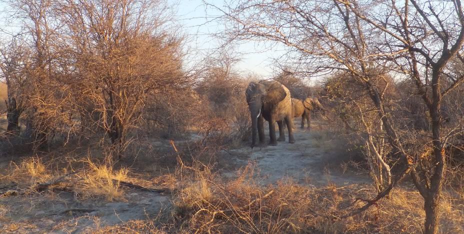 """<strong><a href=""""http://www.africadosul.net/site/default.aspx"""" rel=""""ATLANTIC"""" target=""""_blank"""">ATLANTIC</a></strong>            <strong>O QUE ELA FAZ POR VOCÊ</strong>            Especialista, viaja à <a href=""""http://viajeaqui.abril.com.br/continentes/africa"""" rel=""""África"""" target=""""_blank"""">África</a> há 20 anos.            <strong>PACOTE</strong>            No sudoeste da África, entre desertos e savanas, a<a href=""""http://viajeaqui.abril.com.br/vt/blogs/achados/2016/03/21/10-motivos-para-conhecer-a-namibia/"""" rel=""""Namíbia"""" target=""""_blank"""">Namíbia</a>é habitat de leões, elefantes, leopardos, búfalos e rinocerontes, os big five. Nas 13 noites em hotéis upscale, a ideia é rodar o país de carro (não incluído). Há estadia na capital, Windhoek; no Parque Nacional Etosha (foto) e na Reserva Viljoen, para explorar a fauna; nas desérticas Sesriem e Seeheim; nas termas de Ai-Ais; e em Keetmanshoop. Com pernoite em Johannesburgo na conexão de voo, sai a US$ 3 250."""