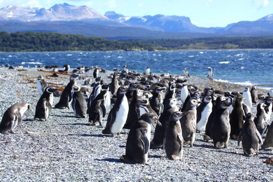 """Na região leste da <a href=""""http://viajeaqui.abril.com.br/cidades/ar-patagonia"""" rel=""""Patagônia"""" target=""""_blank"""">Patagônia</a>, o Oceano Atlântico é demarcado por correntes antárticas que a tornam ricas em espécies marinhas como pinguins, focas e baleias. Os <strong>pinguins-de-Magalhães</strong>, aliás, ficam majoritariamente na Área Natural Protegida Punta Tombo para resguardar seus ninhos de predadores, proteger seus filhotes e se reproduzirem"""