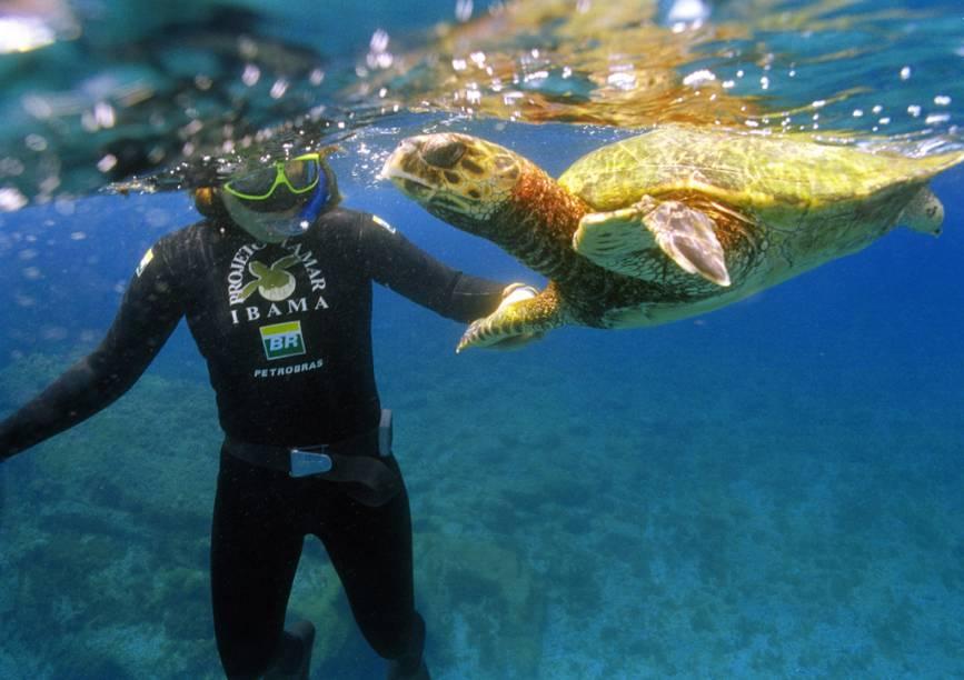 Há mais de 30 anos o Projeto Tamar monitora e protege as tartarugas marinhas no litoral brasileiro. A principal sede do projeto está na Praia do Forte, Bahia, e pode ser visitada