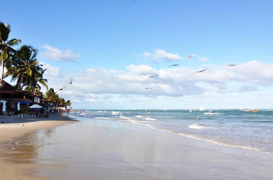 Aves passeiam pela Praia do Francês, perto de Maceió (AL)