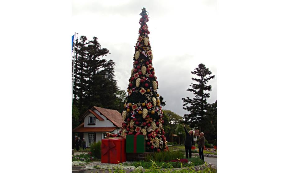 Bela árvore no centro de Canela (RS)
