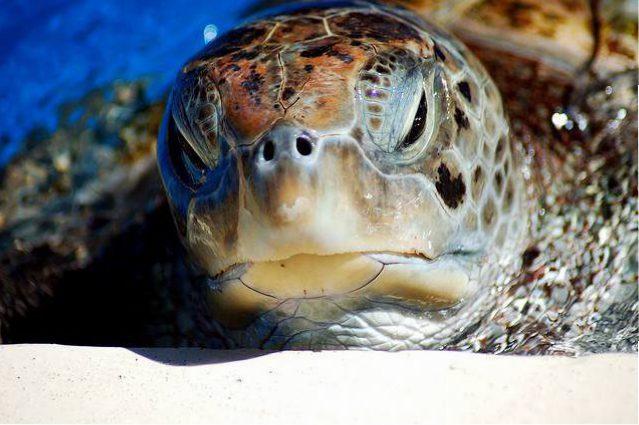 O Projeto Tamar é um dos passeios mais procurados em Praia do Forte