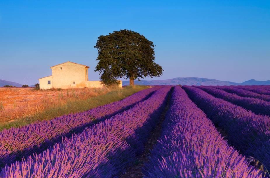 """<strong><a href=""""http://viajeaqui.abril.com.br/cidades/franca-aixenprovence"""" rel=""""Provença"""" target=""""_blank"""">Provença</a>, França</strong>Pegue sua bicicleta e perca-se entre os campos de flores de <a href=""""http://viajeaqui.abril.com.br/cidades/franca-aixenprovence"""" rel=""""Provença"""" target=""""_blank"""">Aix-en-Provence</a>. Pare em um restaurante à beira da estrada e prove comidinhas com aromas e sabores maravilhosos. Queijo, pão, manteiga e vinho, coisas simples farão seu dia.Quando chegar a um campo despudoradamente encantador, repleto de lavandas ao vento, desembarque e curta com seu par essa paisagem tão especial. E não se esqueça do lugar onde estacionou sua bike..."""