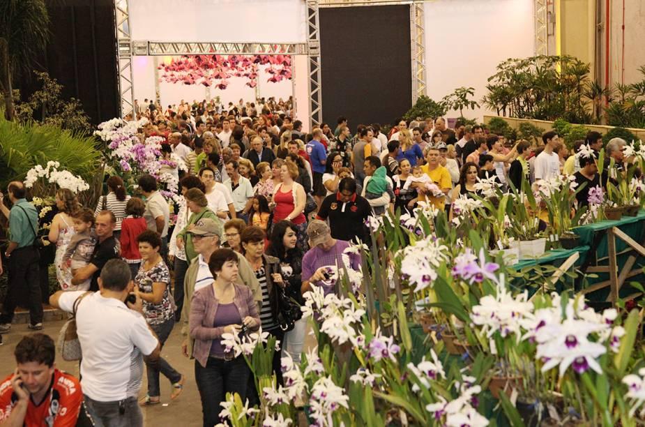 Até dia 16 de novembro acontece em Joinville a 76ª Festa das Flores. O evento é o que mais comercializa orquídeas no Brasil.