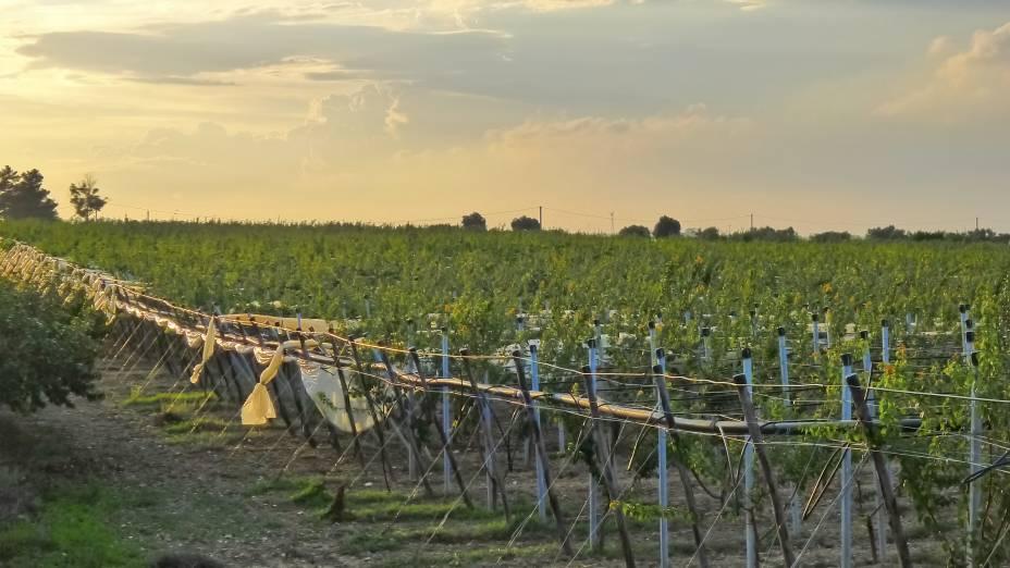 """<strong>Puglia, <a href=""""http://viajeaqui.abril.com.br/paises/italia"""" rel=""""Itália"""" target=""""_self"""">Itália</a></strong>Localizada no sul do país, popularmente conhecido como o """"berço dos vinhos"""", Puglia já foi marcada pela fama de fabricar vinhos de baixa qualidade e produzidos em larga escala. Hoje em dia esse conceito mudou, dando origem a rótulos mais sofisticados e saborosos, sobretudo os de vinho tinto. Uma de suas uvas mais plantadas é a Zinfandel, conhecida na Europa como Primitivo, que resulta em vinhos potentes e muito encorpados<em><a href=""""http://www.booking.com/region/it/puglia.pt-br.html?aid=332455&label=viagemabril-vinicolas-da-europa"""" rel=""""Veja preços de hotéis em Puglia no Booking.com"""" target=""""_blank"""">Veja preços de hotéis em Puglia no Booking.com</a></em>"""