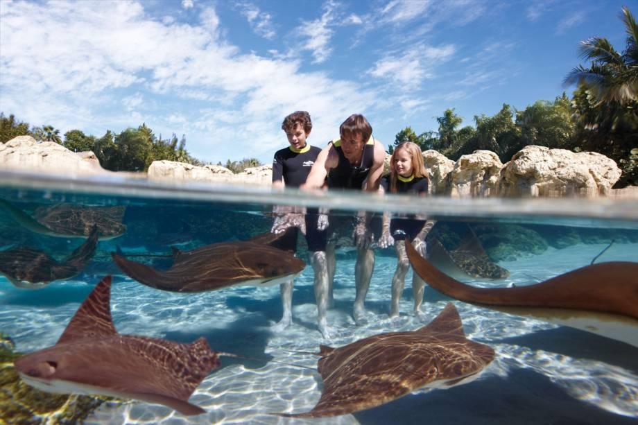 """<strong>2. <a href=""""http://viajeaqui.abril.com.br/estabelecimentos/estados-unidos-orlando-atracao-discovery-cove"""" rel=""""Discovery Cove – Orlando, EUA """" target=""""_blank"""">Discovery Cove – Orlando, EUA </a></strong>                                    Uma das atrações mais procuradas é o mergulho com golfinhos. Mas o Coral Reef (foto) também surpreende com as mais de 160 espécies de peixes e arraias"""