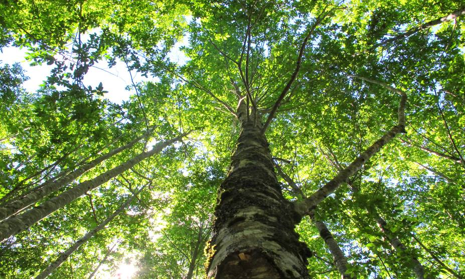 """<strong>14. Reserva Florestal de Huilo-Huilo, <a href=""""http://viajeaqui.abril.com.br/paises/chile"""" rel=""""Chile"""" target=""""_self"""">Chile</a> </strong>            Os habitantes dessa região chilena levam muito a sério a fama de floresta encantada, já que é justamente ela a responsável por atrair turistas à reserva, que inclui um hotel incrível dentro da área de 40 mil hectares. Montanhas e lagos majestosos marcam o seu entorno, correspondente à área selvagem da <a href=""""http://viajeaqui.abril.com.br/cidades/ar-patagonia"""" rel=""""Patagônia"""" target=""""_self"""">Patagônia</a>. Conta-se a lenda que o vulcão Mocho-Choshuenco, localizado nos arredores, é protegido por Don Mocho, um esquiador mágico que coordena suas atividades. Mais um bom motivo pra visitar o lugar!"""