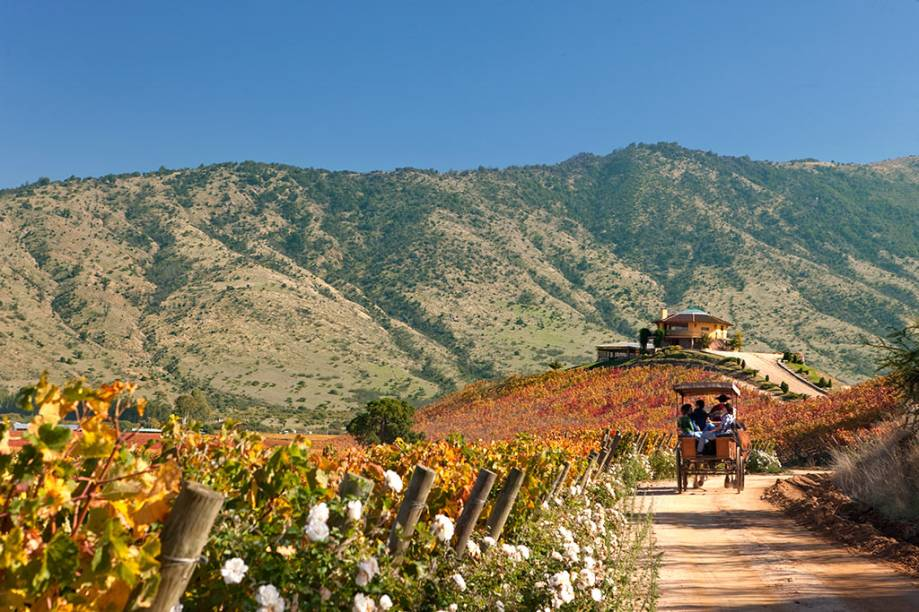 Os vinhedos do Valle de Colchagua estão entre os mais badalados do país. Não à toa: é daqui que saem alguns dos melhores vinhos chilenos