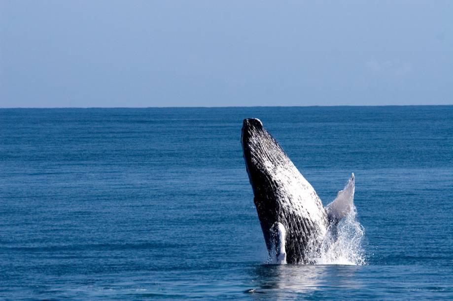 Observação de baleias é uma das muitas atividades possíveis na República Dominicana
