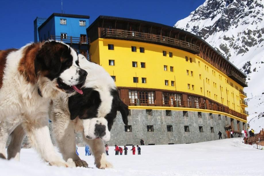 Cães são-bernado em frente ao Hotel Portillo, na região de Valparaíso