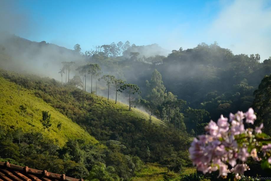 Montanhas e araucárias em paisagem típica da Serra da Mantiqueira, em Santo Antônio do Pinhal