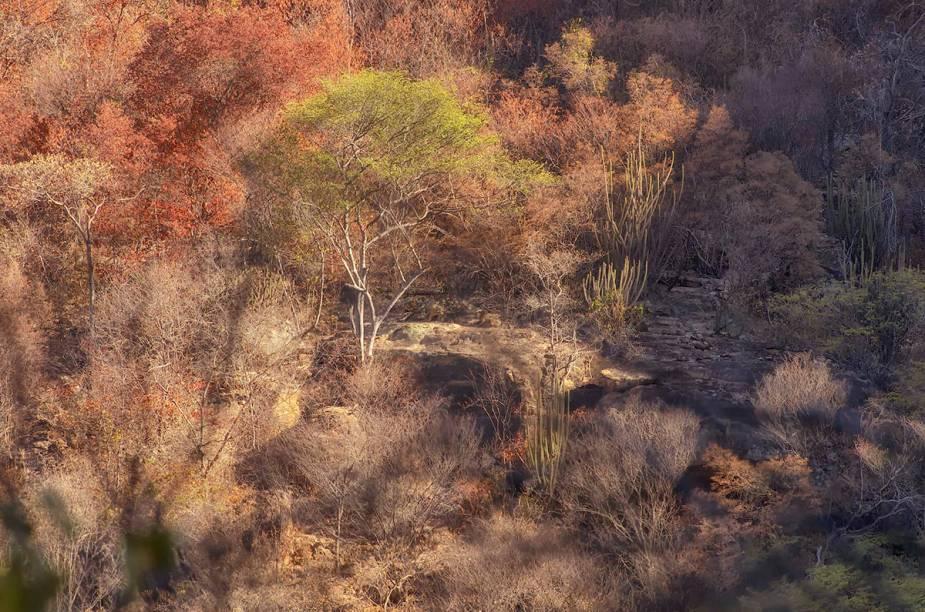 A vegetação doParque Nacional da Serra da Capivara, no Piauí, é uma atração à parte