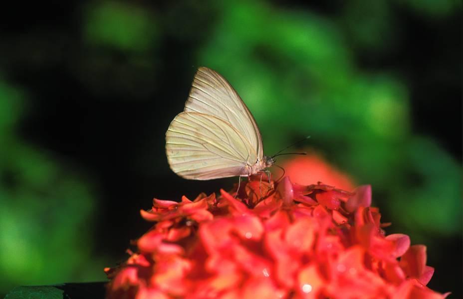 Há mais de 3.000 borboletas na atração do Sesc Pantanal, em Poconé (MT)
